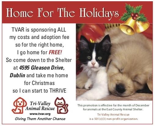TVAR 2018 Shelter Programs Home for the Holidays