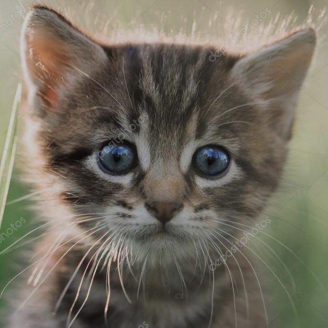 depositphotos_6716219-kitten